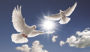 Picture of doves in the sky